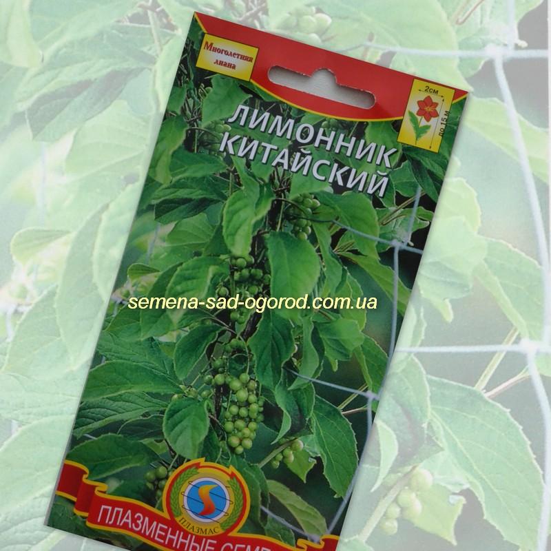 Семена лекарственных растений, трав : Семена Лимонник китайский